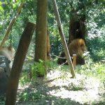 Parco Zoologico di Pistoia