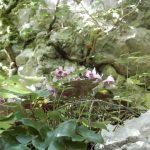 Grotte verdi di Pradis