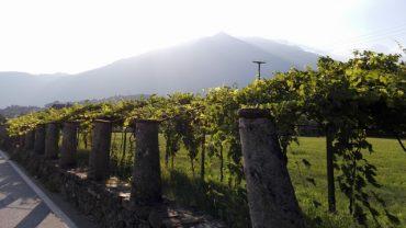 La strada della Serra e il Passo del Penice