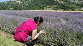 L'Azienda Agricola Monte Spada di Zattaglia: farro, lavanda e tradizione