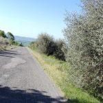 Verso Capalbio